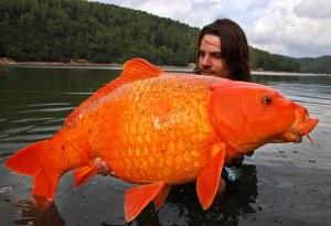 goldfish1[1]