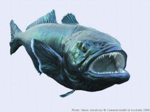 patagonian-toothfish[1]