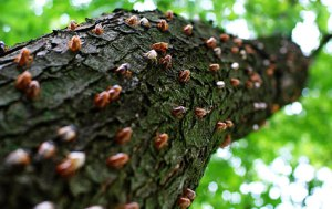 blog_cicadatree[1]