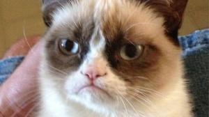 angry-cat-fuuny[1]