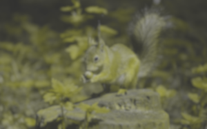 cute-squirrel-wide-wallpaper-501935[1] - DogVision