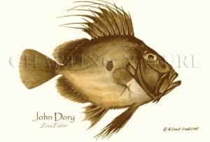 john-dory-2310[1]