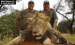 walt-palmer-kills-cecil-the-lion-lead[1]