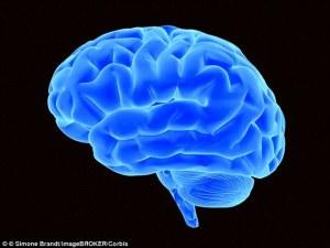 1411575942262_wps_55_Bright_blue_brain_3D_illu[1]